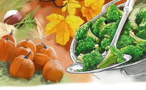 南瓜和brocolli的彩色素描