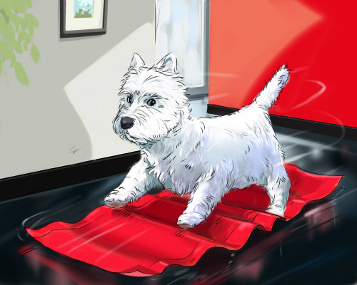 Small dog on a door mat, heavy wind pushing the animal, red cloth on the floor