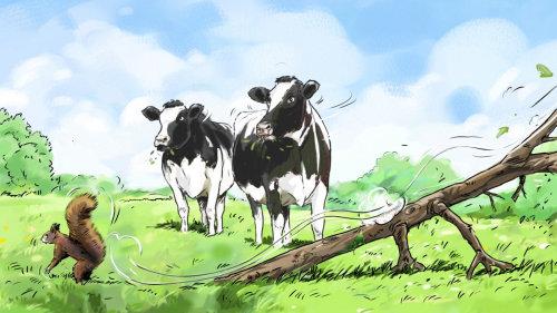 在一个字段中放牧的奶牛的插图