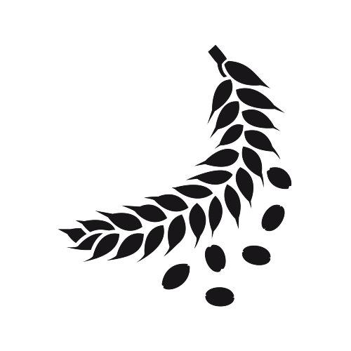Line illustration of leaf