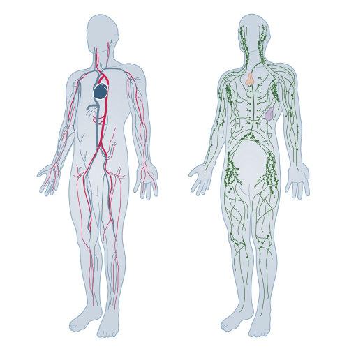 Ilustração do sistema nervoso por Tim Weiffenbach