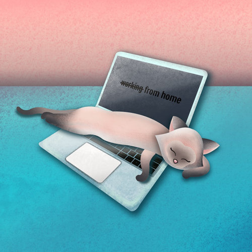 Travailler à domicile, illustration de chat, chat sur ordinateur portable, chat sur illustration d'ordinateur portable, chat d'ordinateur portable, gif de chat