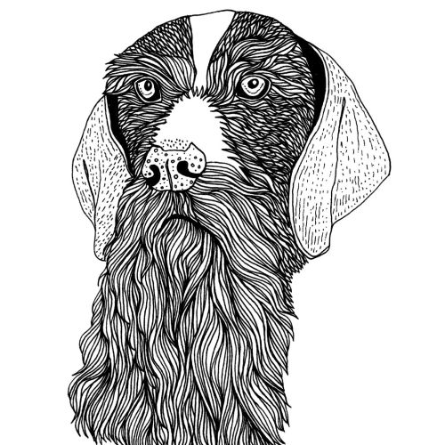 Animal bearded dog