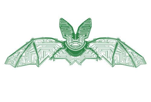 Animals Bat flying