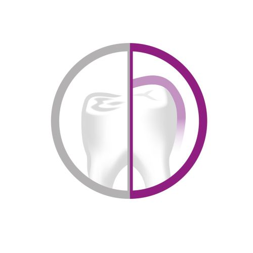 Tooth | Medical illustration collection