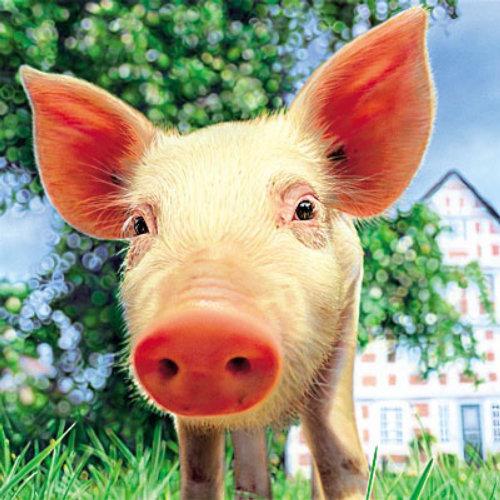 Caractère de cochon animaux