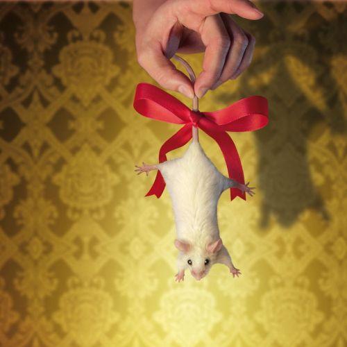 Animals Weivüe Ratte als Geschenk