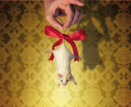 Animaux Weivüe Ratte als Geschenk