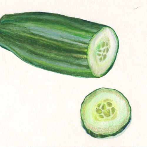food illustration of Cucumber