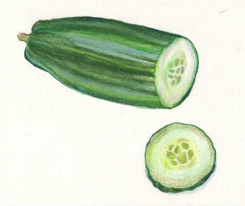 food illustration of Cucumber