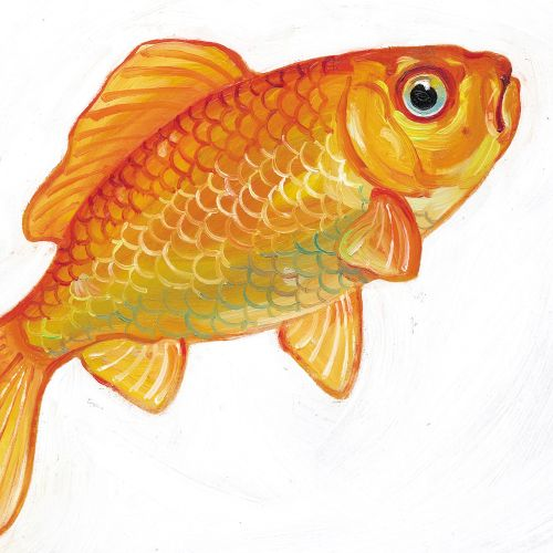 colorfill art of Goldfish