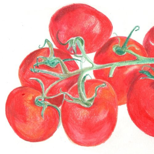 Vine Tomatoes | Food and Drink illustration