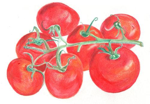 Vine Tomatoes | Food and Drink illustration