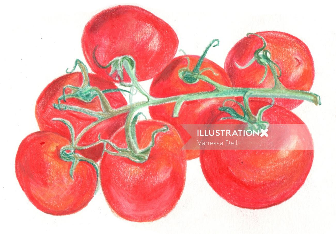 Vine Tomatoes   Food and Drink illustration