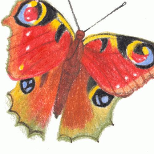 Affiche papillon colorée pour Universal Pictures