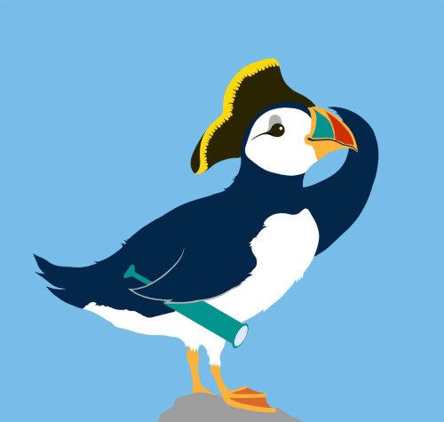 papagaio-do-mar, pássaro, chapéu de capitão,