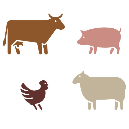 Infographics of animals
