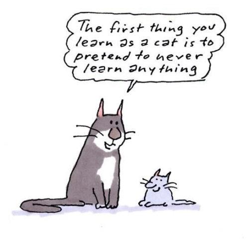 Cartoon illustration of cat and kitten communication by Gray Jolliffe
