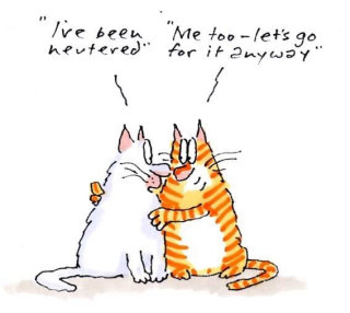 Cats illustration by Gray Jolliffe