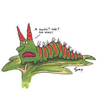 Cartoon caterpillar illustration by Gray Jolliffe