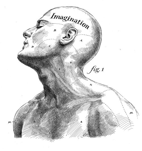 Face line drawing of muscular man