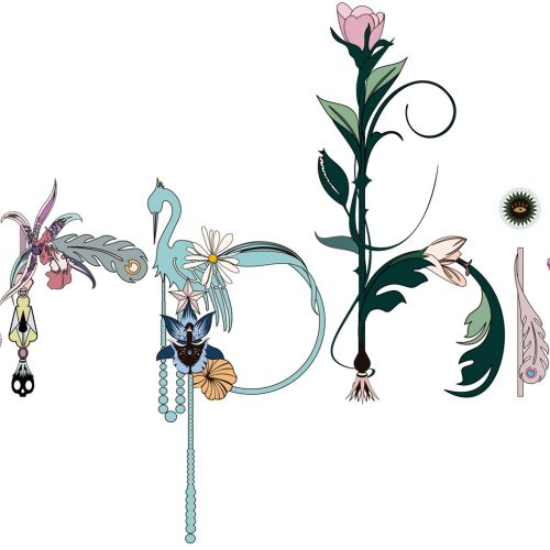 Nadia Flower Decorative illustrator.  New Zealand