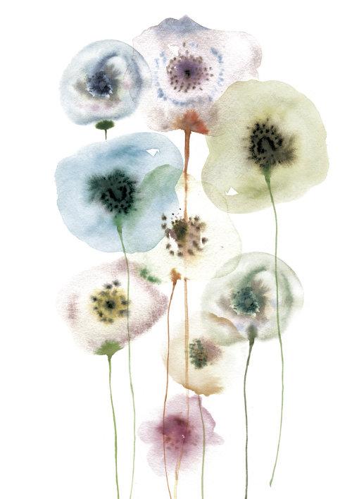 Flores de beleza