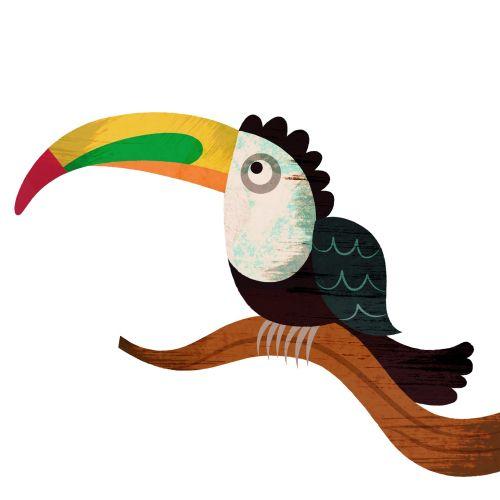 Animals long nose bird