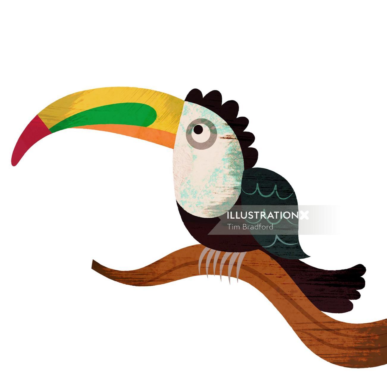 Toco toucan, long nose bird illustration