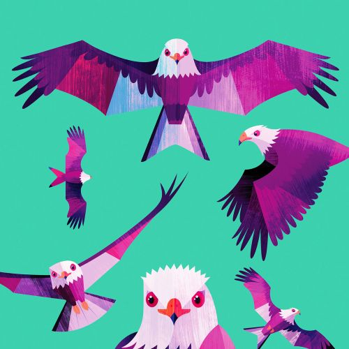 Animal illustration of colorful birds