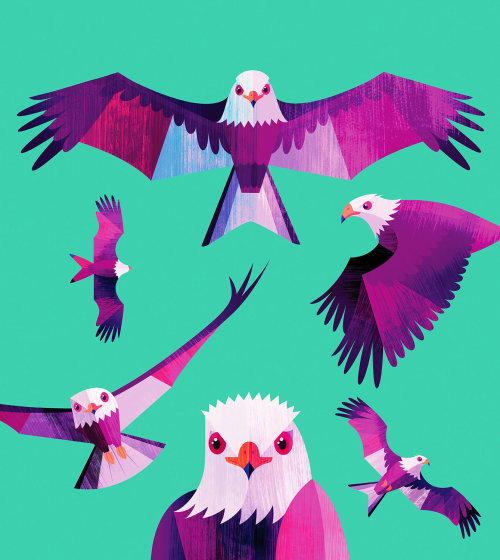 Animal illustration of colorful birds