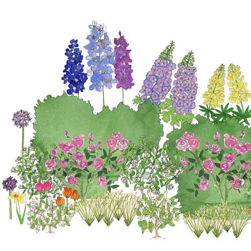 Plants, Beds & Borders