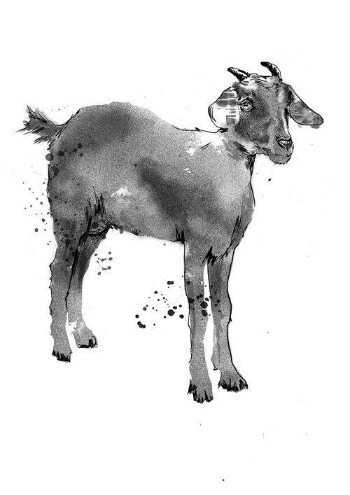 An illustration of Goat