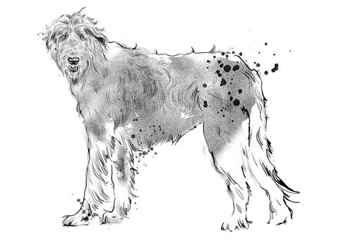 Golden Retriever dog illustration