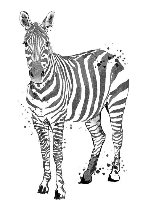 Zebra | Animal illustration collection