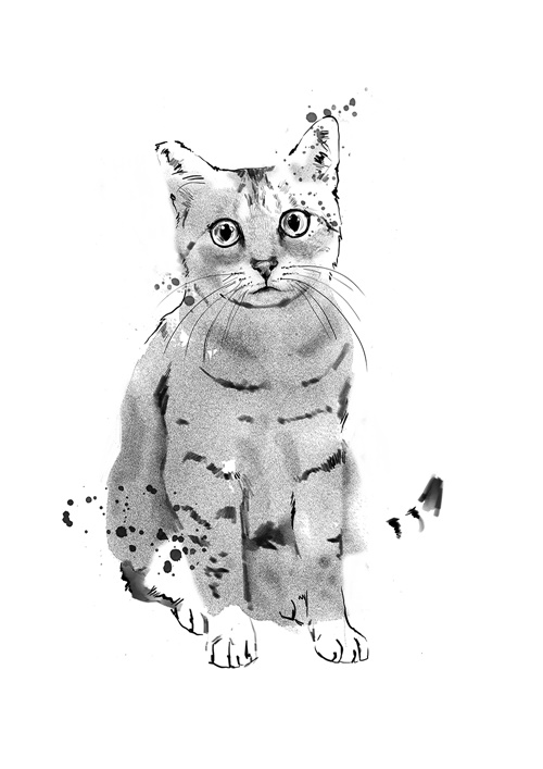 Cat illustration by Tracy Turnbull