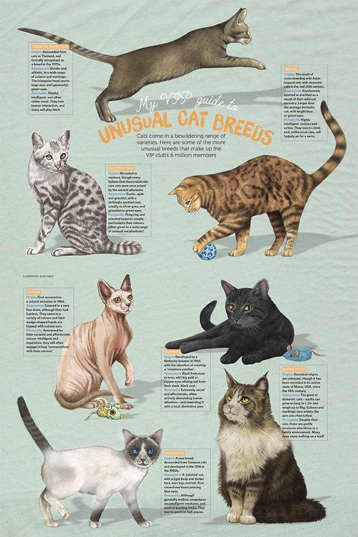 Cat Breeds Poster Art by Alan Baker