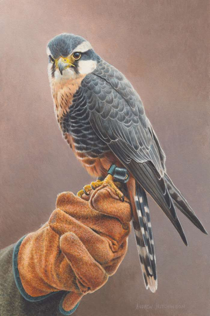 photorealistic illustration of wildlife