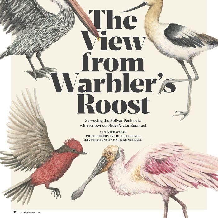 Pontos de observação de pássaros