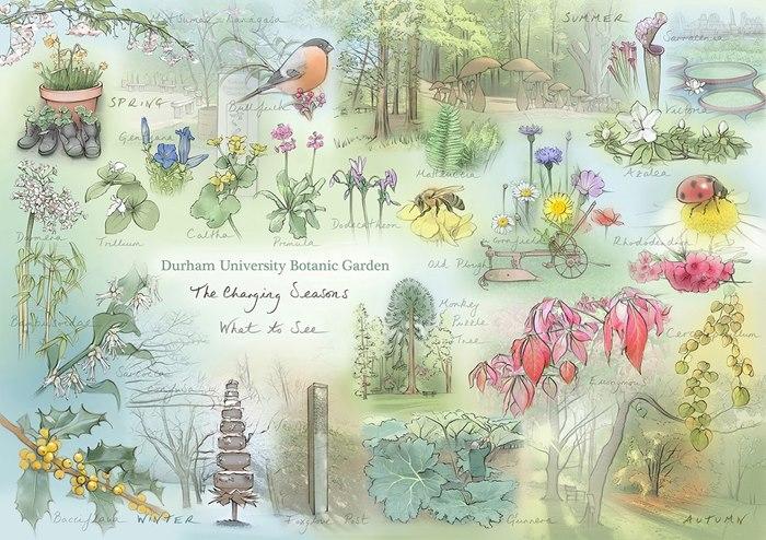 Watercolor drawing of The University of Durham Botanic Gardens