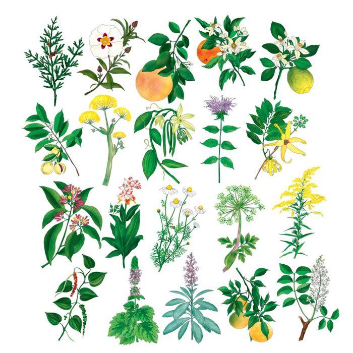 Aromatherapy Cards